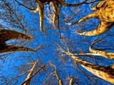 1_treesup-h550