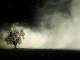 3_savigny-smoke-h550