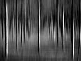 trees-dist-42x60