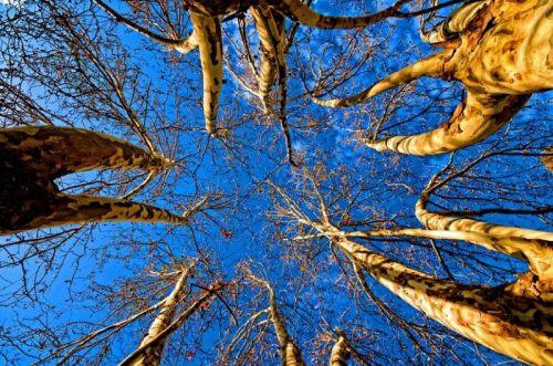 1 treesup-h550