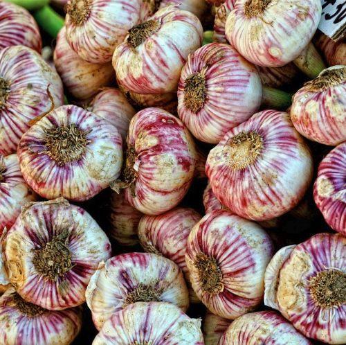 garlic-small