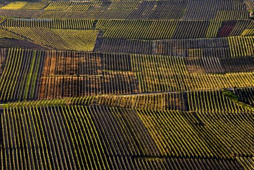 mancy-vineyard